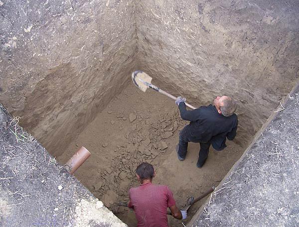 шерстью это чем обложить сливную яму на болотестой местности уход